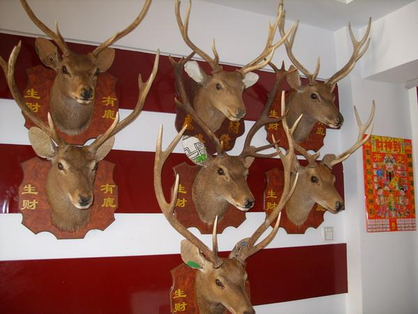 鹿头标本 欧式壁挂 壁炉装饰 田园风格鹿头 高清图片
