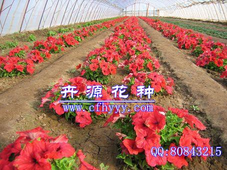 赤峰卉源园艺有限公司