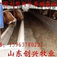 畜牧局牛羊养殖基地重庆牛羊养殖基图片