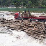 陕西长期供应柞木原木