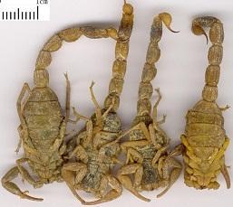 吉林省中药材东北动物其他类丨报价、供应、销售