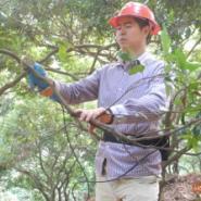 鸿川电动果树修枝剪园林园艺树枝机图片