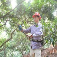 供应树枝果树园艺修剪树枝齿轮电动剪刀