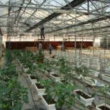 供应柳州温室大棚通风降温工程-柳州种植场排风机-柳州养殖场水帘墙加