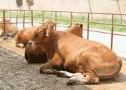 供应广西河池养牛场