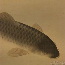 供应北京鲫鱼价格