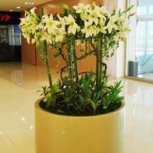 供应玻璃钢花盆厂家/玻璃钢花盆的定义/玻璃钢音乐盒