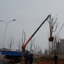 供应3-16吨园林业 湖南百特专业生产