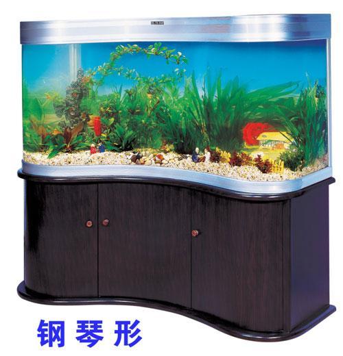 深圳鱼缸 金鱼图片