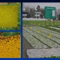 供应农业用具-粘虫板(黄板)