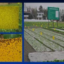 供应农业用具-粘虫板(黄板)图片