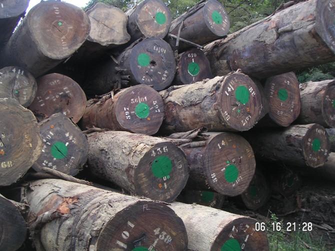 供应进口几内亚/莫桑比克木材办理什么图片