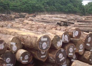 木材进口代理图片