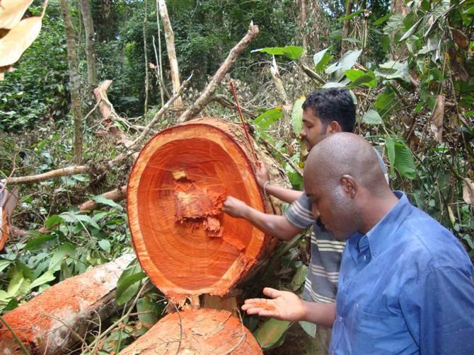 供应进口木材需要需要哪些手续图片