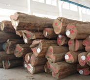 国外进口木材需不需要物种检验图片