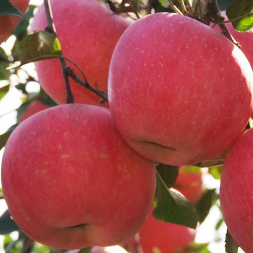 山东水果批发市场