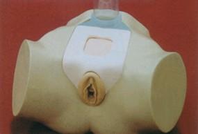 高级女性膀胱穿刺模型图片|高级女性膀胱穿刺模型