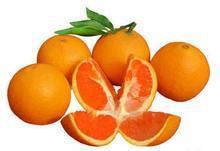 供应赣南脐橙新品会昌脐橙种植基地最新脐橙种植基地批发