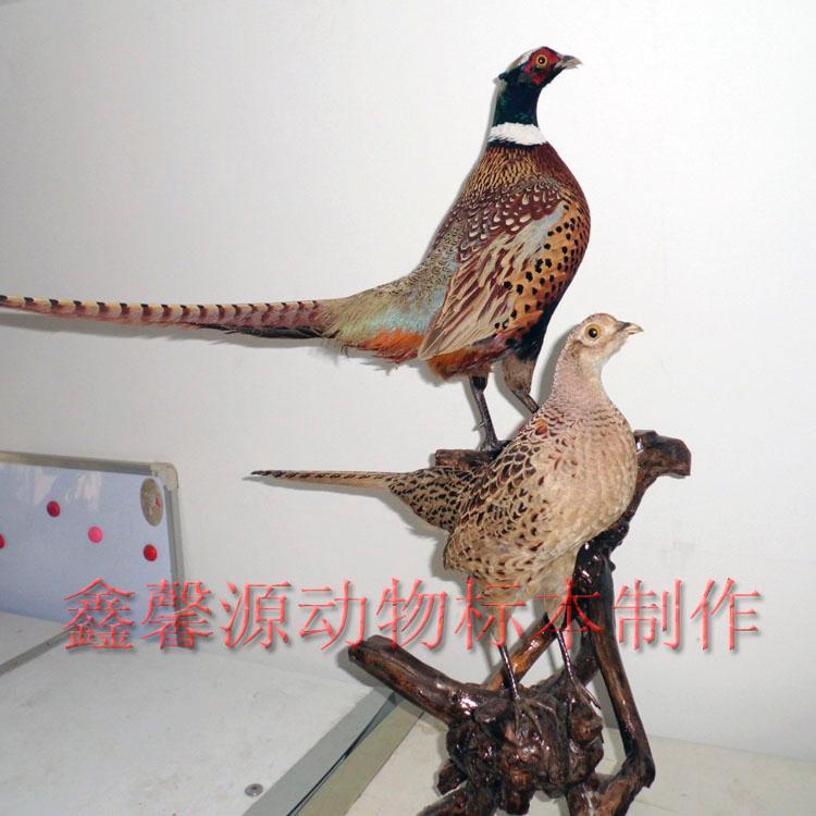 鸟类标本工艺品图片_鸟类标本工艺品图片大全