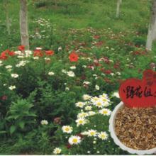供应野花组合