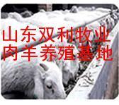 供应万只纯种肉羊种羊苗小尾寒羊杜泊绵羊波尔山羊白山羊黑山羊黄羊批发