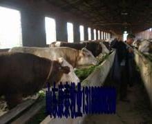 奶牛饲料的饲喂限量