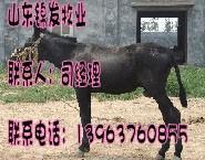肉驴的批发厂家