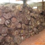 代理马来西亚橡胶木材进口报关报价
