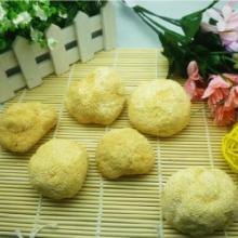 供应云南特产丽江猴头菇促进血液徇环降低血液中胆固醇含量批发