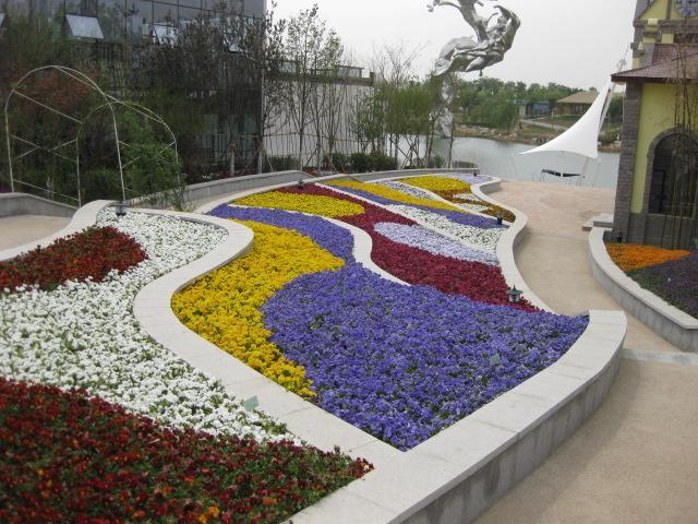 绿化工程花卉种子