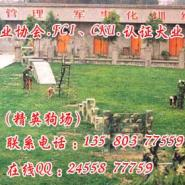 广州哪里有狗场图片
