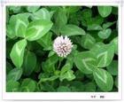 昆明花卉种子,最好的的花卉种子公司的联系方式?