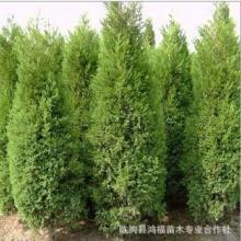 供应北京绿化苗木