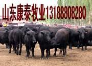 供应如何给牛用药