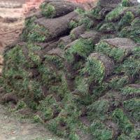 供应普通草皮-绿化工程-马尼拉-美国一号
