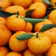 供应南丰蜜桔生鲜水果18329019386
