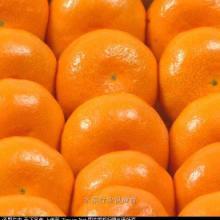 供应生鲜水果蜜桔之王18329019386