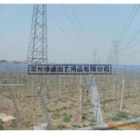 江苏绿盛蓝莓防鸟网/水果防鸟网