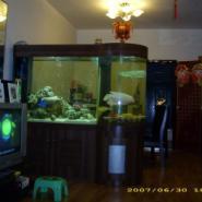 广州白云区各种样式的鱼缸换水公司图片