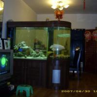 供应广州白云区各种样式的鱼缸换水公司
