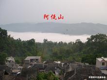 供应云南公明山茶批发商价格