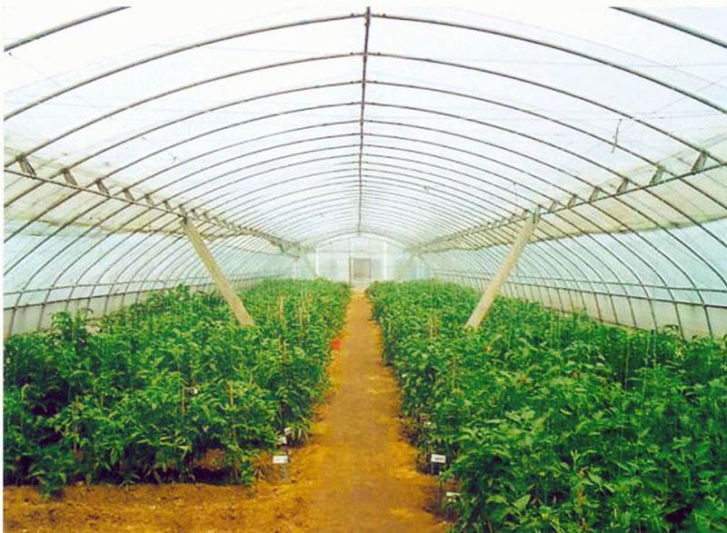 7 最优冬暖式蔬菜大棚建设厂家 承建钢架大棚高清图片