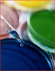 常熟抗氧化剂BHT测试图片