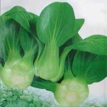 蔬菜配送部_农产品价格_章背生鲜蔬菜配送中心