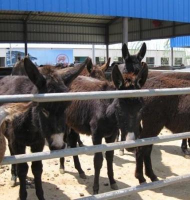 肉驴养殖场图片/肉驴养殖场样板图 (1)