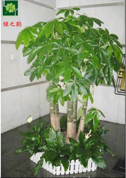办公室_办公室供货商_供应办公室绿植酒店花卉