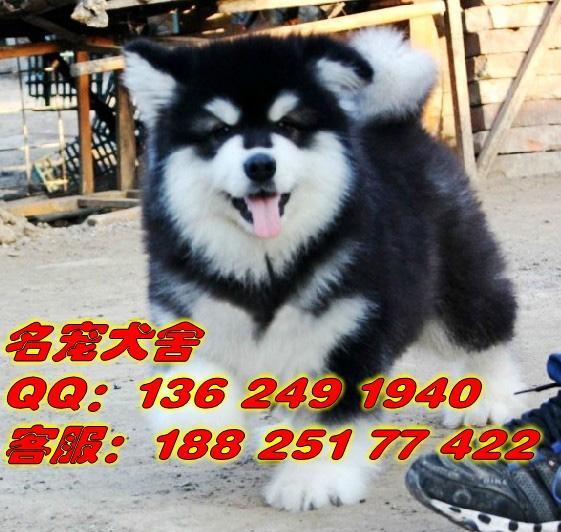 广东省宠物狗专业繁殖名宠狗场