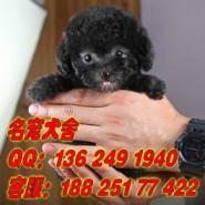 广州哪里有宠物狗繁殖场图片