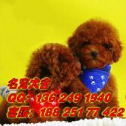 广州信誉好的的狗场繁殖出售中型犬图片