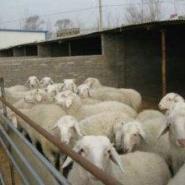 吉林大型肉牛肉羊养殖效益分析肉牛图片